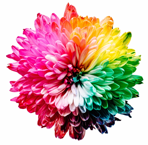 Flower in all rainbow colours